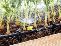 Капельный полив своими руками: создаем систему автоматического полива + 86 фото