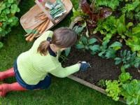 Как украсить огород своими руками: креативное оформление и разбивка на зоны (53 фото + видео)