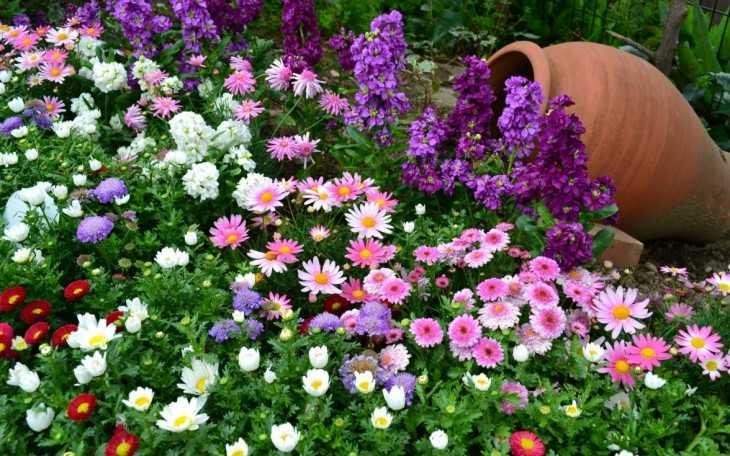 цветники своими руками 87 фото зонирования декоративных цветов