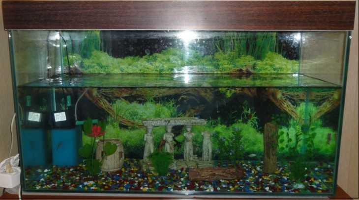 200 литров аквариум своими руками