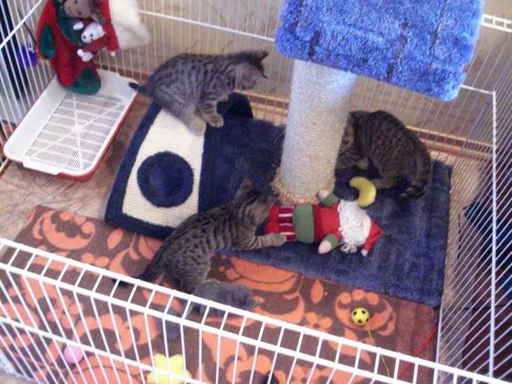 Гнездо для кошки своими руками фото 49