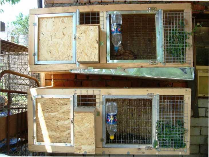 Клетки для содержания кроликов своими руками подробные чертежи и схемы фото 604