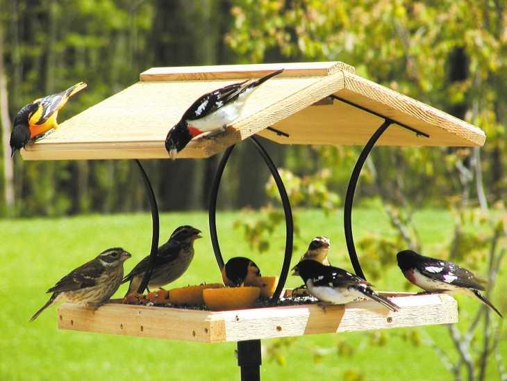 руками украшение птицами своими