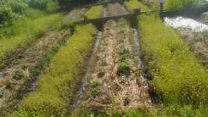 Огород своими руками для ленивых 321