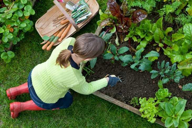Украсить огород своими руками фото