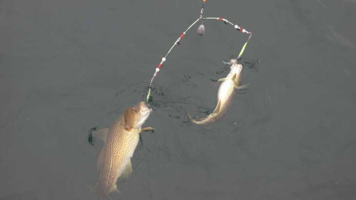 Рыболовные снасти из подручного материала грузило, скорее всего