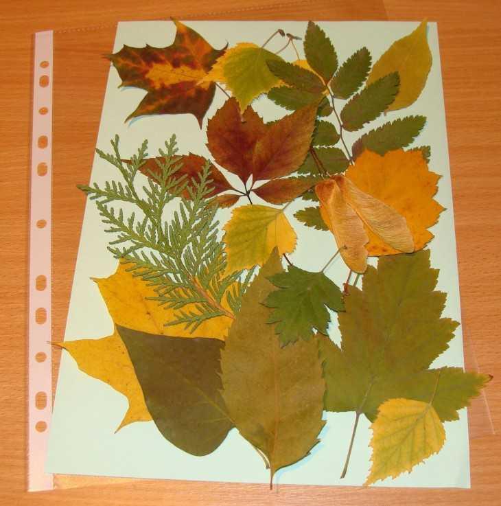 Поделки из листьев и из гербария 230