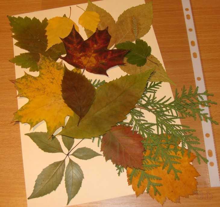 Поделки из листьев и из гербария 698